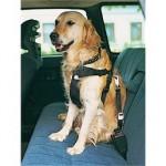 Ikke noget med løs hund på bagsædet (Foto Petworld.dk)