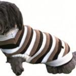 Lad hunden holde varmen med en sweater (foto Petworld.com)