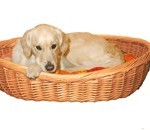 Er denne kurv noget for din hund? (foto petworld.dk)