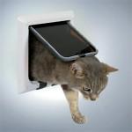 Katte kan godt slippe af med allergi (foto lavprisdyrehandel.dk)