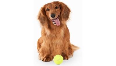 hund flåt lopper tyggepille
