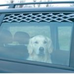 Pas godt på din hund på køreturene (foto: lavprisdyrehandel.dk)